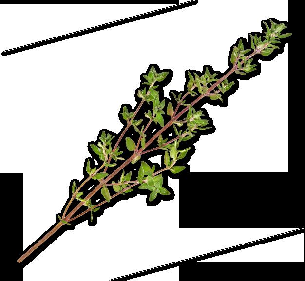Botánicos Ginmare